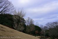 熊本県民総合運動公園の梅 - Mark.M.Watanabeの熊本撮影紀行