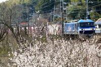 春 2021年3月11日 - 鉄道日和