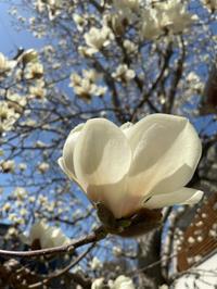 白い花 - か ん ば ら 日 記