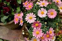 ねこときゅうりと芥川龍之介の話。 - きょう、花が咲いた。もしかすると、昨日かもしれないが僕にはわからない。