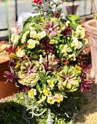 リースの寄せ植えの芯止め♫と地植えにできる庭が欲しい〜、 - 薪割りマコのバラの庭