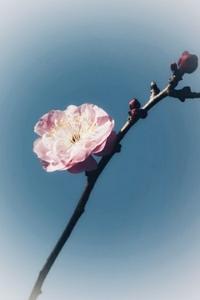 花は咲く - + anything goes +
