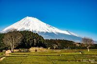 それぞれの富士山3 - toshi の ならはまほろば