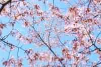 3月11日 - Lens Life Blog