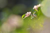 純粋な心 - お花びより