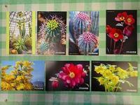 サギソウふれあい教室を開催 - 手柄山温室植物園ブログ 『山の上から花だより』