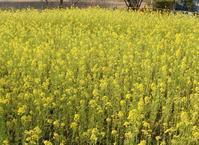 緑区の花ごよみ(3月) - 緑区周辺そぞろ歩き