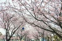 春は暮らしを見直すチャンス、雑誌をチェック - 美的生活研究所