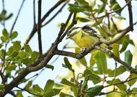 キバラガラ - くまさんの二人で鳥撮り