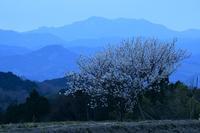 大峰の見える花の山麓御所市 - 峰さんの山あるき