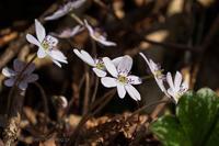 小さな春見つけた Ⅱ - デジタルで見ていた風景
