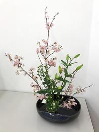 春満開のお稽古 - 自然を見つめて自分と向き合う心の花