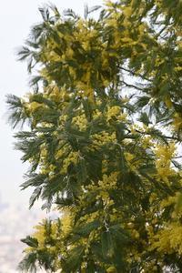 21年早春の自然(17)…黄色の爆発 - ふぉっしるもしてみむとてするなり
