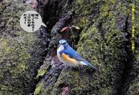 久しぶりの春雨一雨ごとに木々や草の芽を成長していく! - Weblog : ちー3歩 Ⅱ