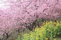 春満喫 - 心のままに