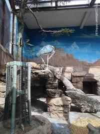 2021年2月天王寺動物園その3 - ハープの徒然草