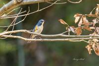 また来年 - Berry's Bird