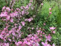 木に咲く花〜次々と - アオモジノキモチ
