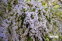 小さな春 - 写心でスピリチャルパワーを