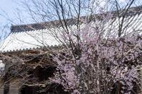 「京の桜-東寺さん-」 - ほぼ京都人の密やかな眺め Excite Blog版