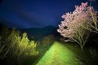桜の咲く山麓の小道高天寺橋本院 - 峰さんの山あるき