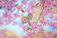 春めく♬ - 【♪心に残る情景♪(^ε^)-☆Chu!!】