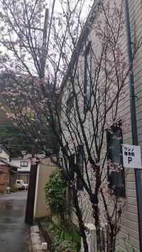今年も咲きました - ウンノ接骨院(ウンノ整体)と静岡の夜