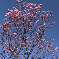 春の陽ざしに陽光桜 - みちくさ 摘み草 語りぐさ