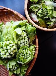 春の恵み - Kitchen diary