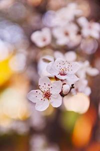 桜 - 日々の写真