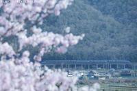 春を旅したい - PTT+.