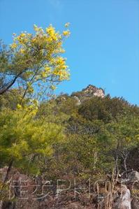 白滝山・黒滝山・貧乏山(福寿山)2021/03/14 - まるさん徒歩PHOTO 4:SLやまぐち号・山風景など…。 (2018.10.9~)