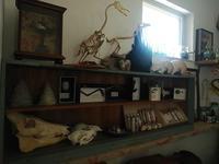 標本室。 - 古道具ときどき猫。