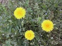 苗の様子と種まき - 自然農☆☆☆菜園日記