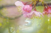 早咲きの桜*Ⅱ - It's only photo 2