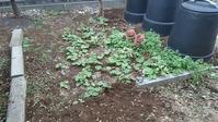 家庭菜園の準備 - ウィズコロナのうちの庭の備忘録~Green's Garden~
