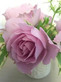 ブログを引越しました。。♪ - 妖精と香りの庭