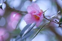 花のささやき - はっぴいでいず