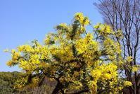 春を探しにヨヨコウへ - さんじゃらっと☆blog2