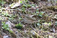 出会いの少なかった野鳥たち Byヒナ - 仲良し夫婦DE生き物ブログ
