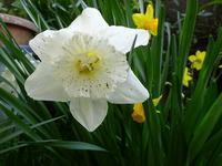 春は芽吹き花咲く草木の彩り - 花と葉っぱ