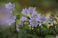 小さな妖精の花園龍樹神社 - 峰さんの山あるき