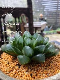 OPENです〜♬ -  Flower and cafe 花空間 ivory (アイボリー)