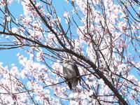 花咲く頃 - 節操のない写真館
