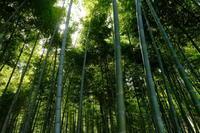 若竹の杜 - 錦眼鏡