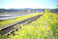 里山の春 - aya's photo