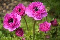 マイガーデンに咲く春の花 - 季節の風を追いかけて