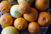柑橘類まつり♪ - Lovely Poodle