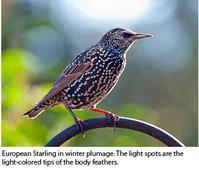 羽の色が季節で変わる - ののち幾星霜
