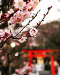 須磨綱敷天満宮 - Rose ancient 神戸焼き菓子ギャラリー